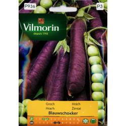 Groch Blauwschokker (Pisum sativum)