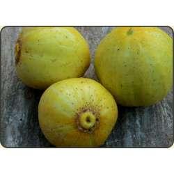 Ogórek gruntowy ozdobny i jadalny Lemon