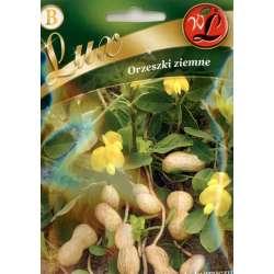 Orzeszki ziemne - Arachis hypogaea - 10g