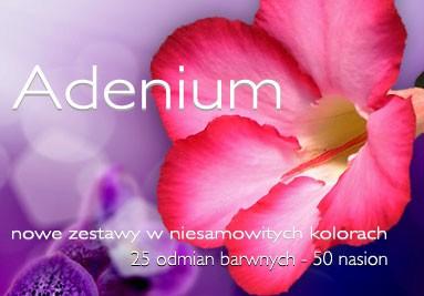 Zestawy Adenium - 25 odmian