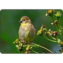 Barwna mieszanka kwiatów wabiąca ptaki