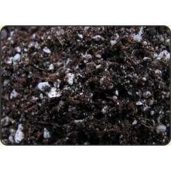 Podłoże do adenium plumeria sukulenty - 3 litry